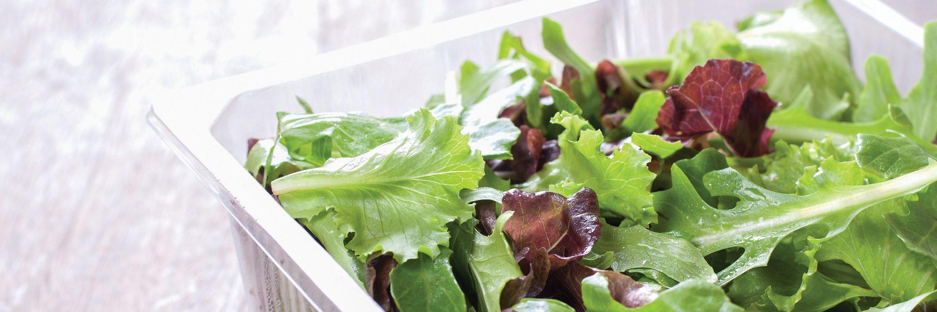 Food Processing Plants Study + Design