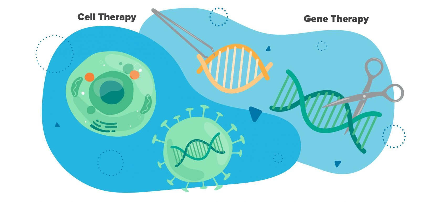 intro to ATMP Manufacturing infograph - the difference between cell therapy and gene therapy